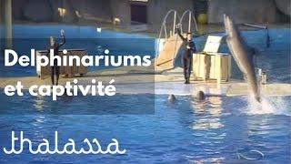 Documentaire Delphinariums et captivité des cétacés