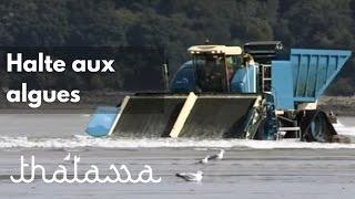 Documentaire Halte aux algues