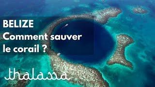 Documentaire Bélize, comment sauver le corail ?