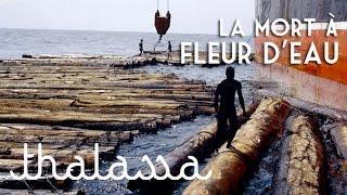 Documentaire Kroomen, la mort à fleur d'eau
