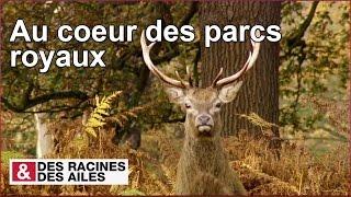 Documentaire Les parcs royaux de Londres