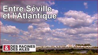 Documentaire Entre Séville et l'Atlantique