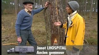 Documentaire C'est pas sorcier – Landes : sous la forêt, la plage