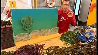Documentaire C'est pas sorcier – Algues