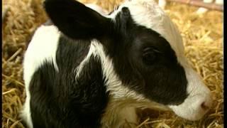 Documentaire C'est pas sorcier – Sur le plancher des vaches