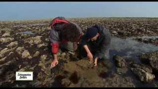 Documentaire Échappées belles – Charente-Maritime, dans les bras de la mer