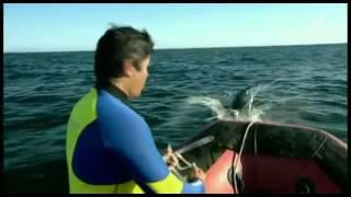Documentaire Cachalot contre calmar géant