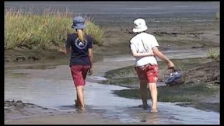 Documentaire L'île sauvage (Cap-Ferret)