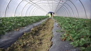 Documentaire Agriculture : comment manger plus sain ?
