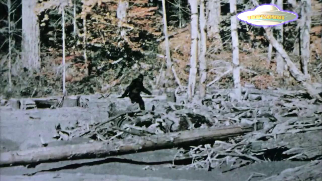 Documentaire Sur la piste des aliens – Sur les traces du bigfoot