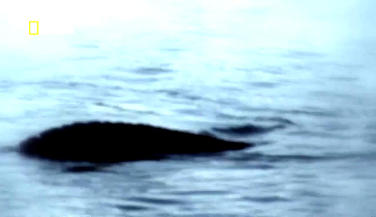 Documentaire Toute la vérité sur: le monstre du Loch Ness
