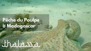Documentaire Chasseur de poulpe à Madagascar