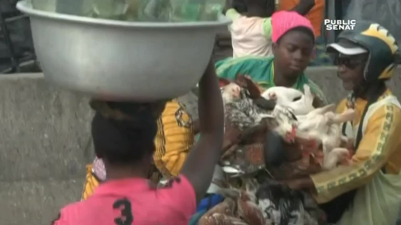 Documentaire Les dessous de la mondialisation – Bénin, poulet morgue