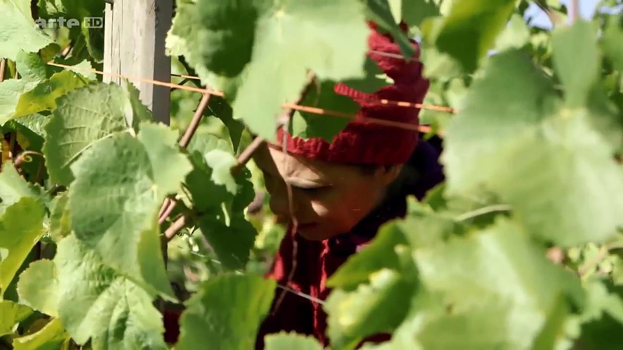 Documentaire Sarah Wiener – Une semaine avec les vignerons de la Sarre