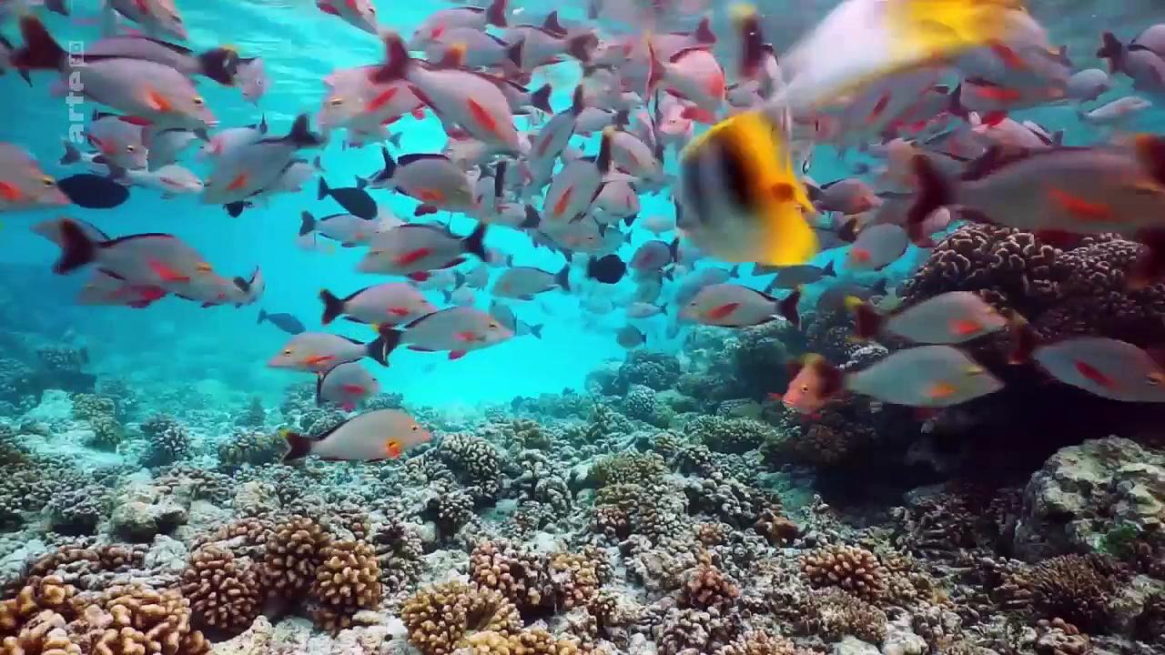 Documentaire À la découverte des mers du Sud