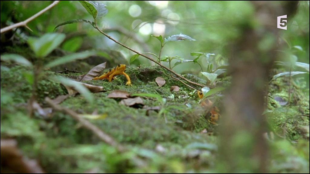 Documentaire Histoires de grenouilles