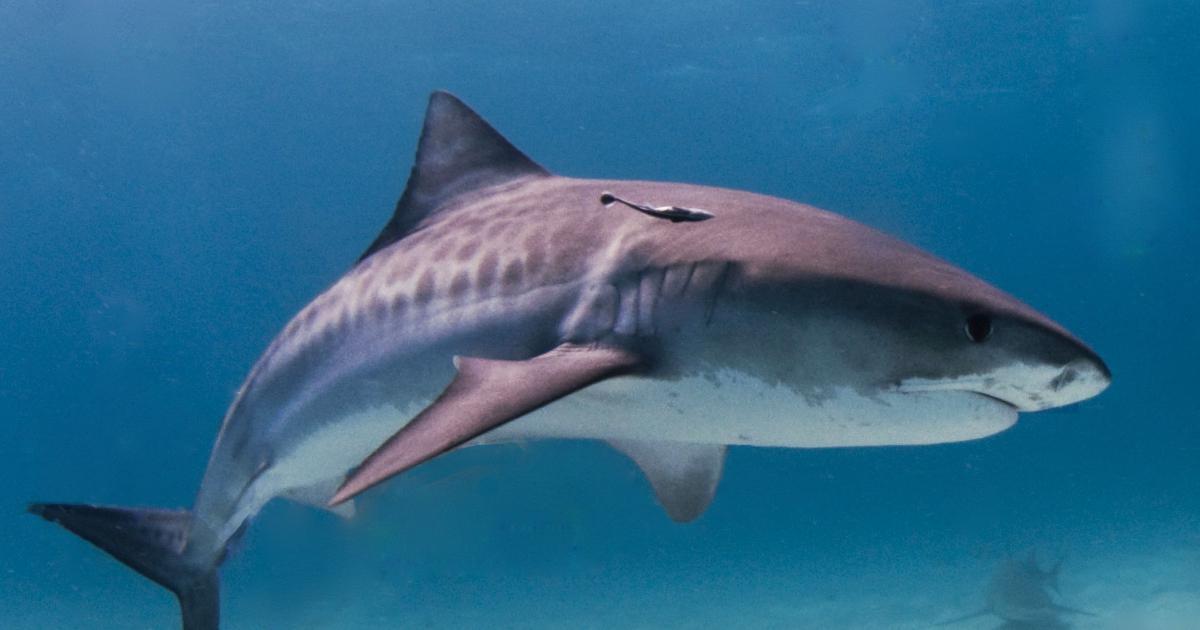Documentaire Le rendez-vous des requins