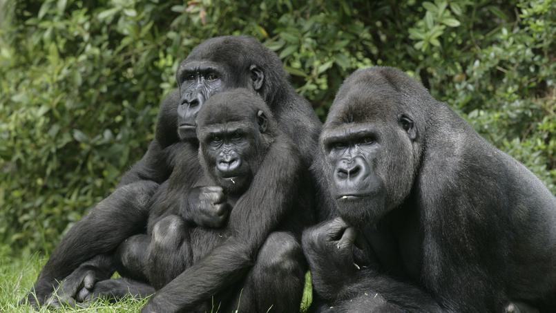 Documentaire Le royaume des singes