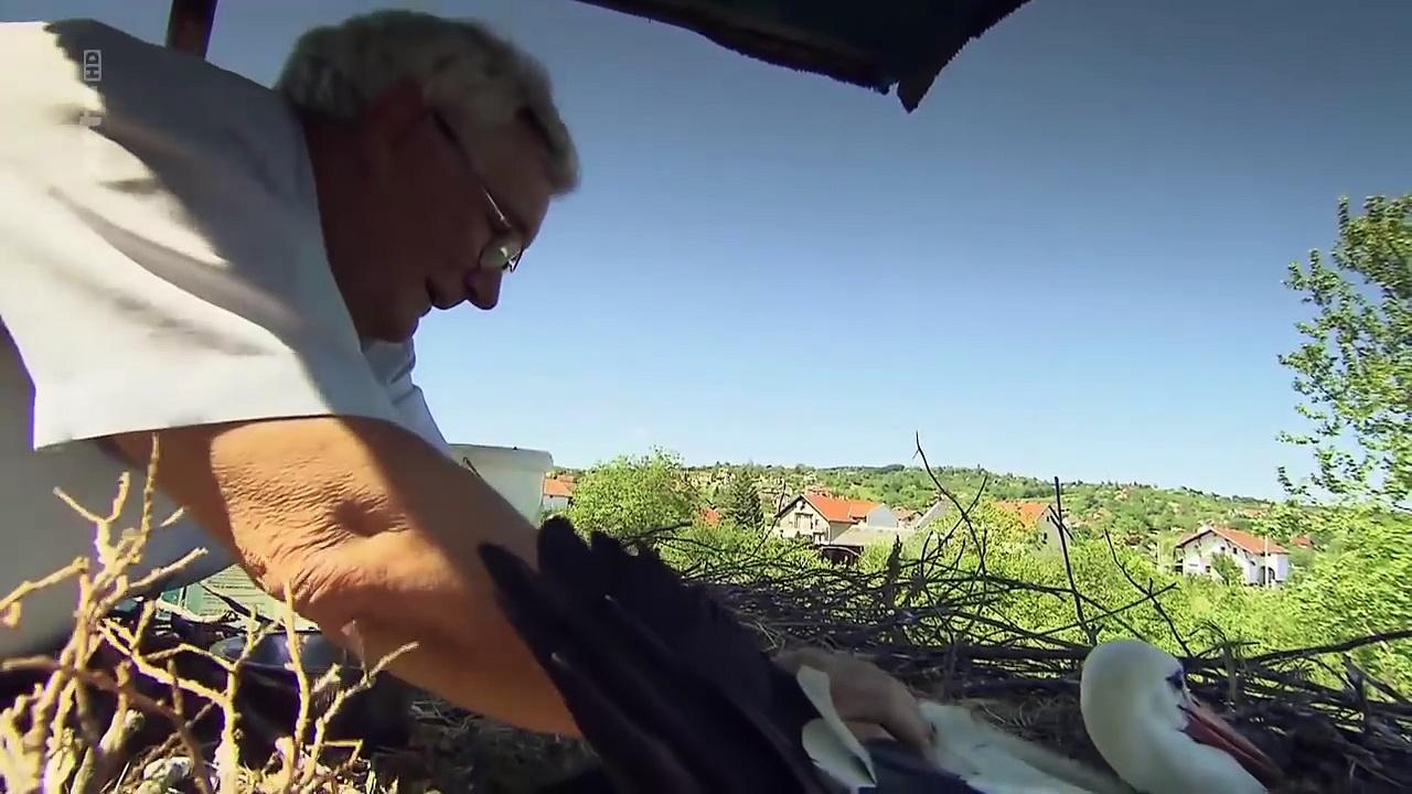 Documentaire Le vieil homme et la cigogne