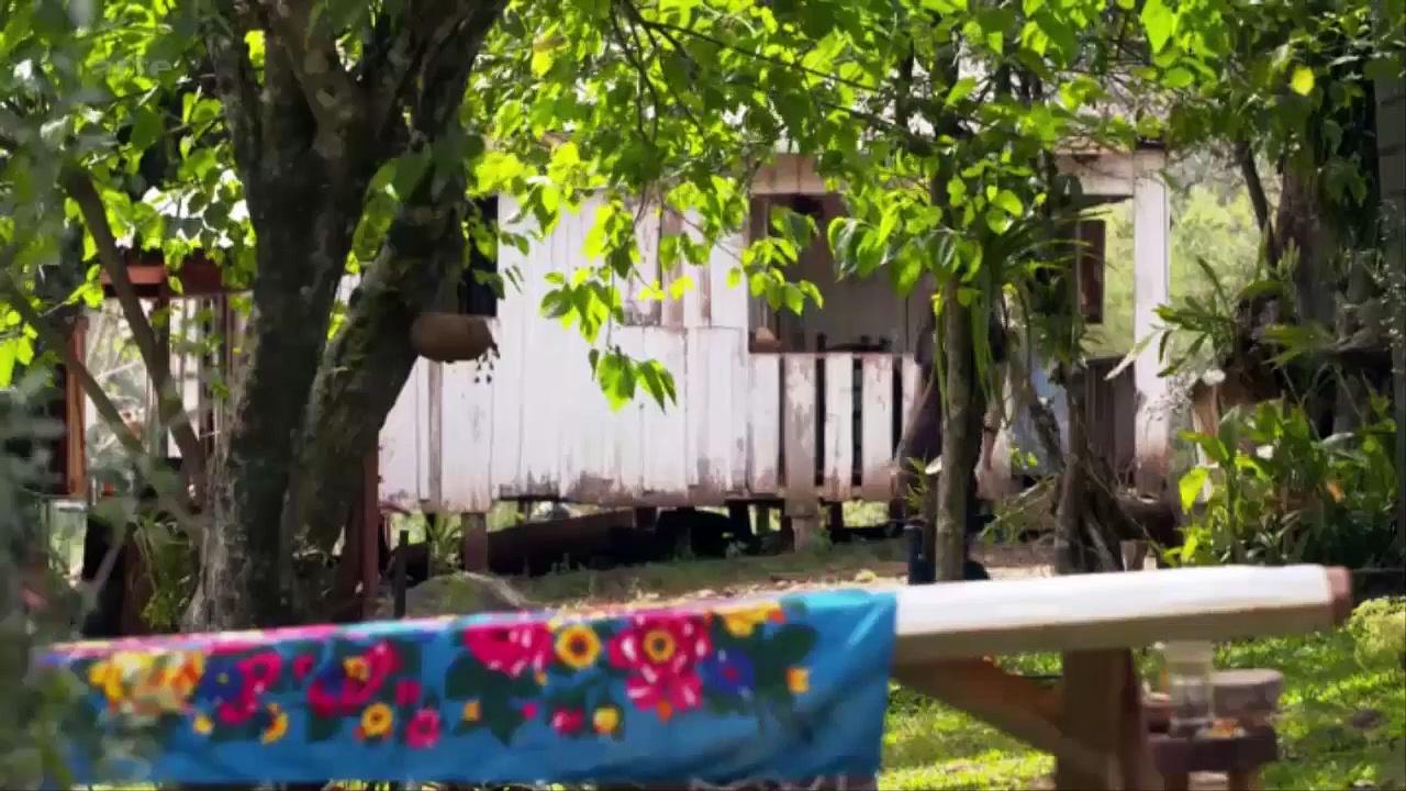 Documentaire Le génie des plantes – En Amérique du Sud