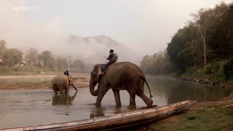 Documentaire Les trésors de l'Asie du Sud-Est – Laos, le pays des éléphants