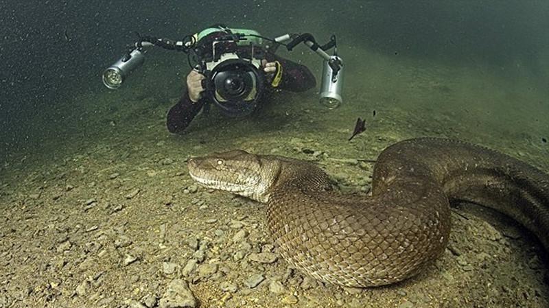 Documentaire Monstres Marins – Plongée avec l'Anaconda