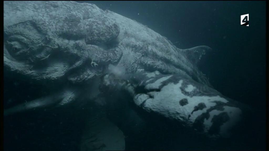 Documentaire Safari Préhistorique – L'aquarium de l'enfer