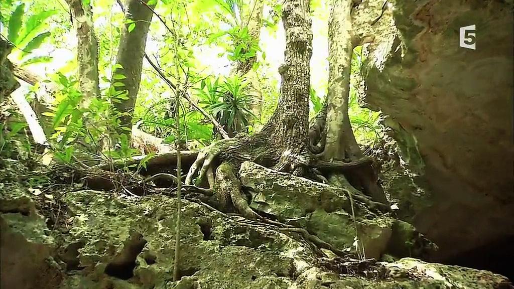 Documentaire Yucatan, culture nature, culture maya