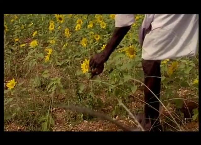 Documentaire Ayurveda, l'art de vivre