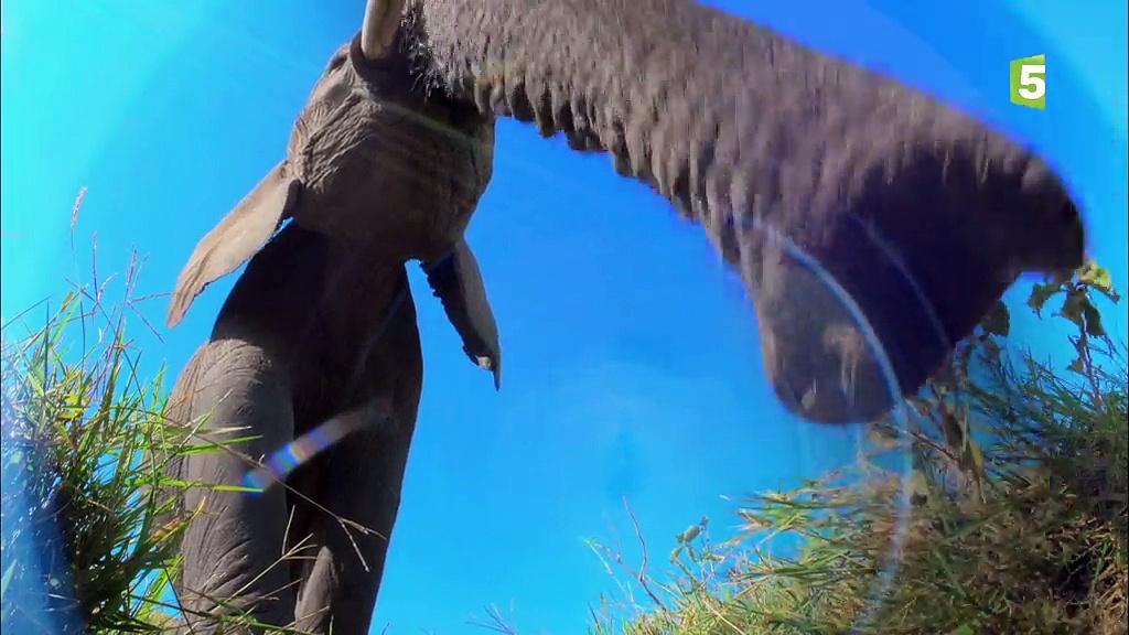 Documentaire Caméras espions en terre animale –  Histoires d'amitié