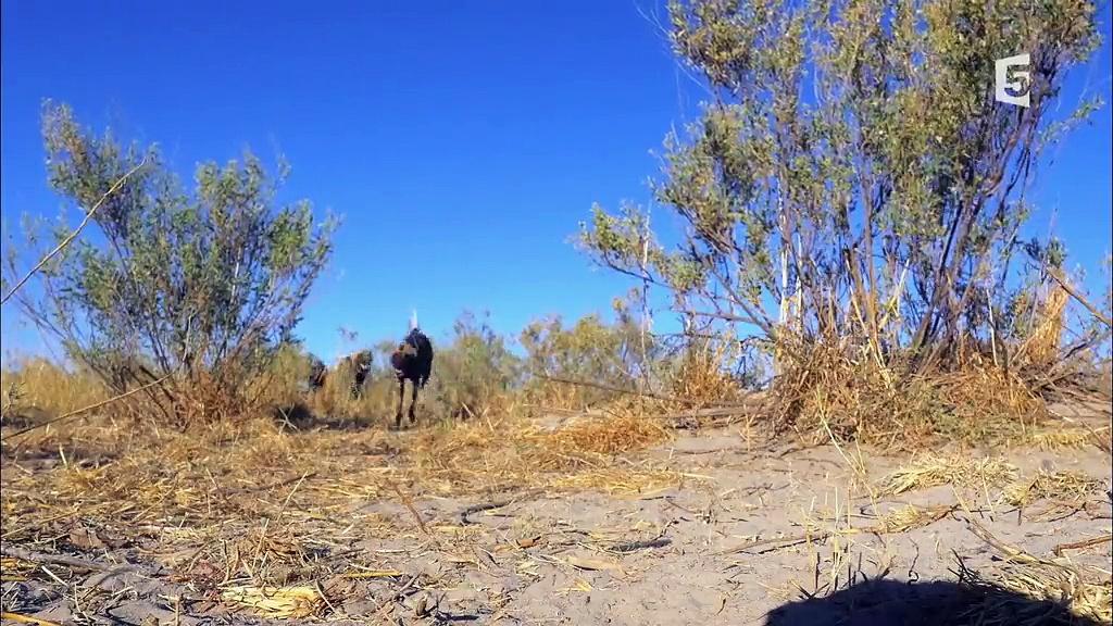 Documentaire Caméras espions en terre animale – Le parfait amour