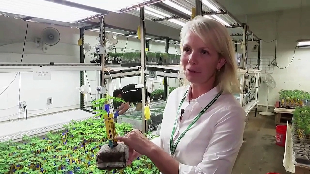 Documentaire Colorado : plein pot sur la marijuana