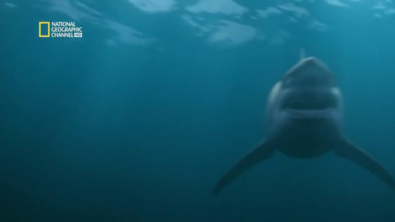 Documentaire Danger de mort – EP06 – Attaque de requin