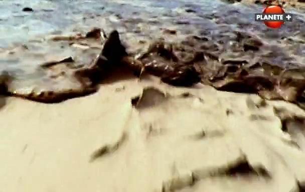 Documentaire Les grandes cités disparues : la capitale de Ramsès II (1/3)