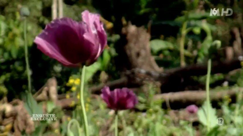 Documentaire Fêtes, opium et aventures (1/2)
