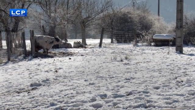 Documentaire Une tournée dans la neige