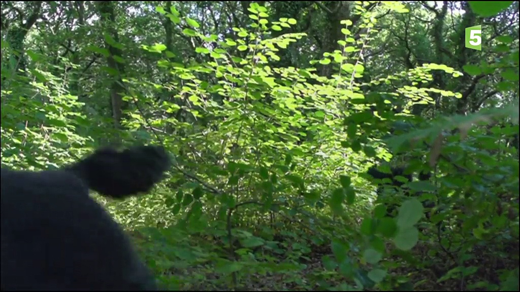 Documentaire Intelligence animale – Comprendre l'autre