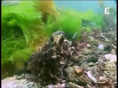Documentaire Les mystères de la pieuvre