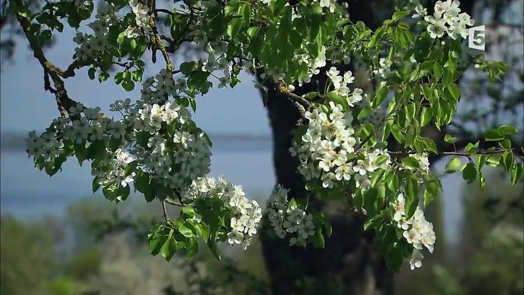 Documentaire Une année au lac de Constance