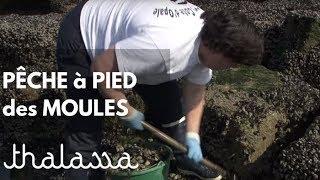 Documentaire Pêche à pied des moules