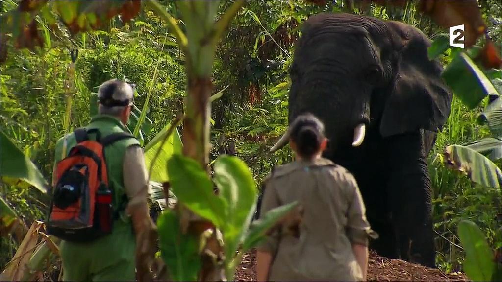 Documentaire Grandeurs nature – Eléphants, l'opération de la dernière chance