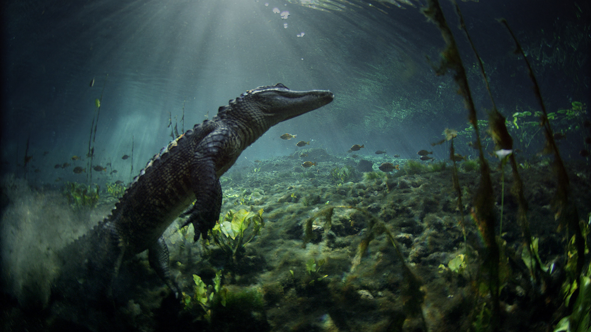 Documentaire Les Parcs Nationaux américains – 1/4 – Everglades