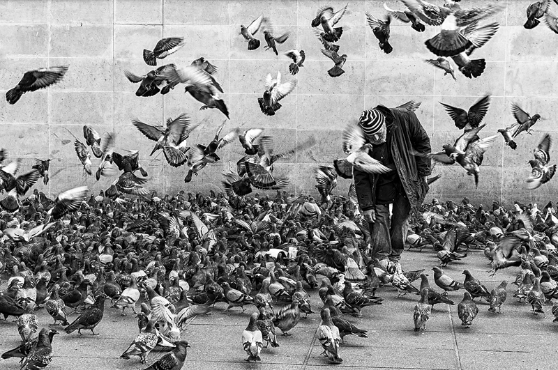Documentaire Les pigeons et les hommes