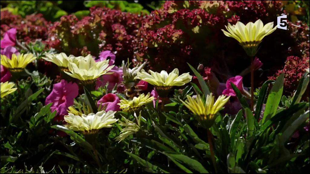 Documentaire Un royaume au fil des saisons – L'été