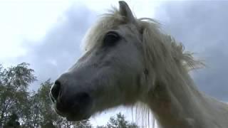 Documentaire CERZA, dans les coulisses d'un parc zoologique