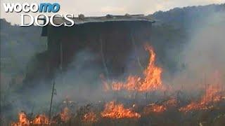 Documentaire Les dégâts écologiques causés par la culture du tabac en Afrique
