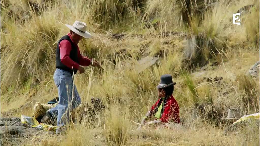 Documentaire Grandeurs nature – Montagnes sauvages, la cordillère des Andes