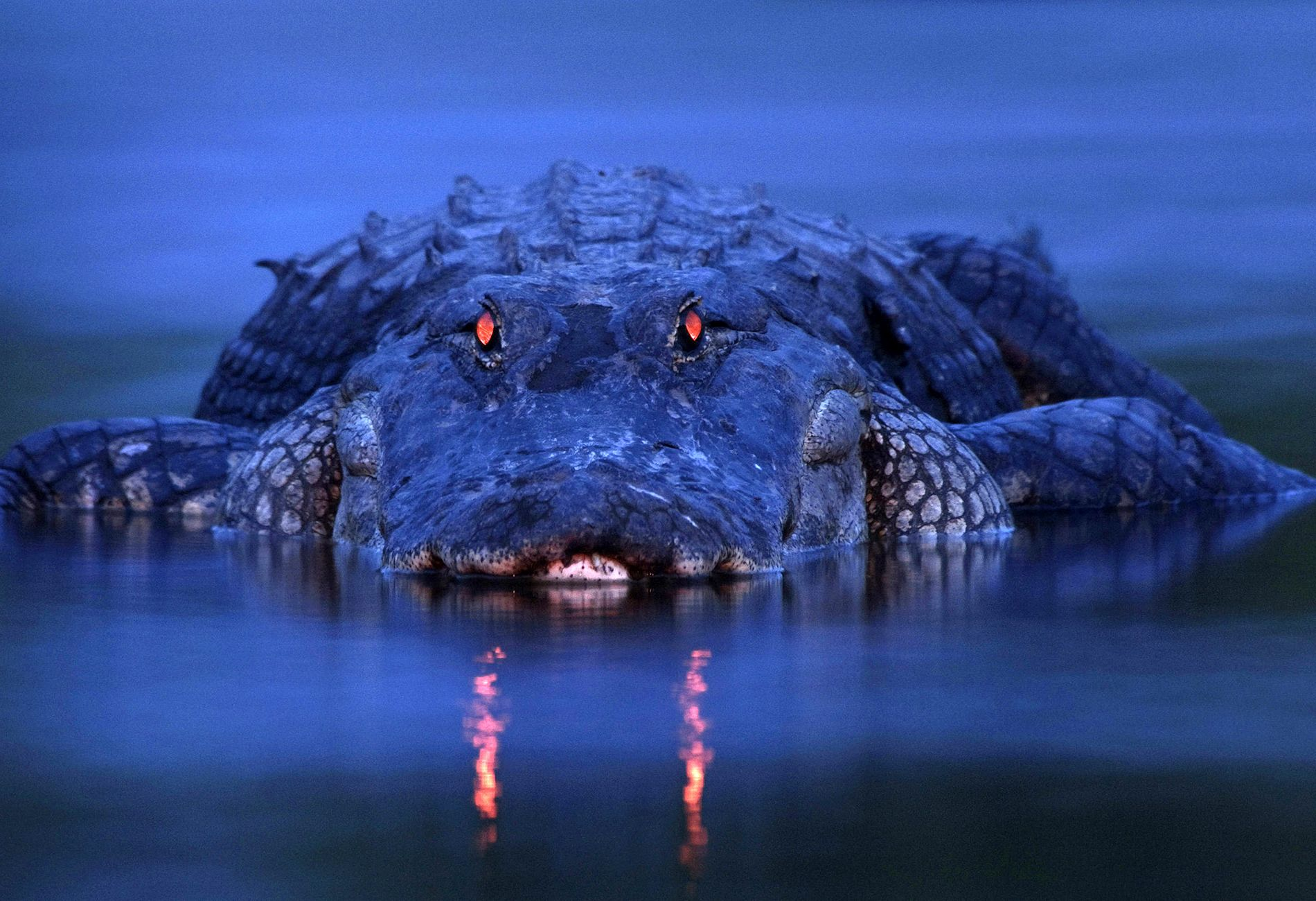 Documentaire La nuit du crocodile