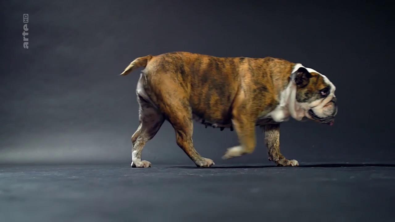 Documentaire Le chien : enquête sur un animal familier