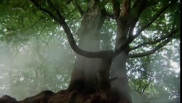Documentaire Le crépuscule des dieux (1/2)
